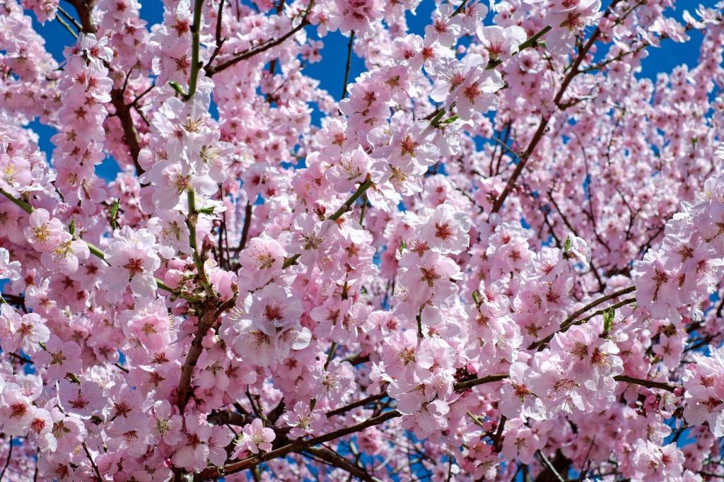 Primavera Ritual